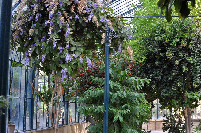 rocaille-blog-palermo-orto-botanico-botanical-garden-5
