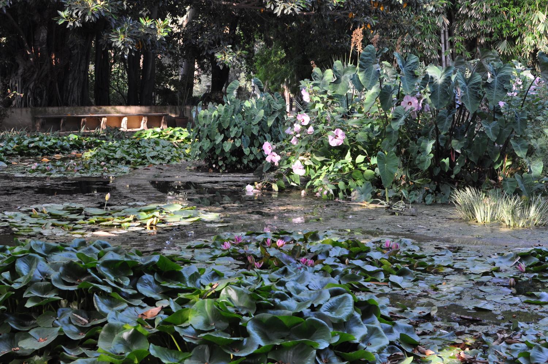 rocaille-blog-palermo-orto-botanico-botanical-garden-7