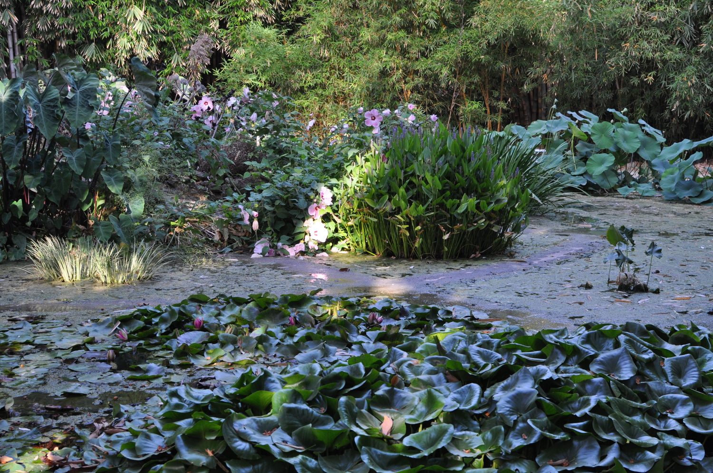 rocaille-blog-palermo-orto-botanico-botanical-garden-8