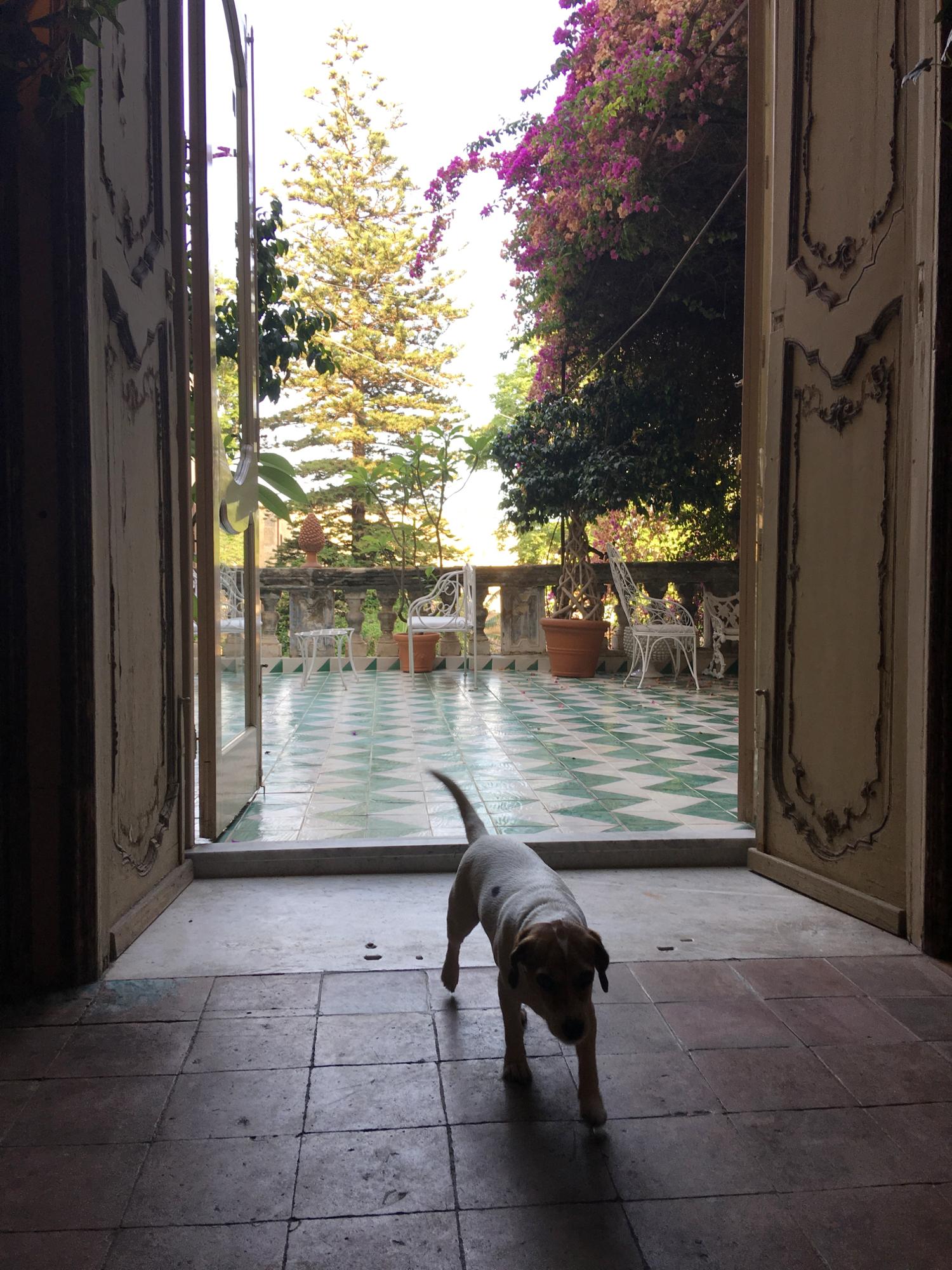 rocaille-blog-palermo-palazzo-ajutamicristo-12