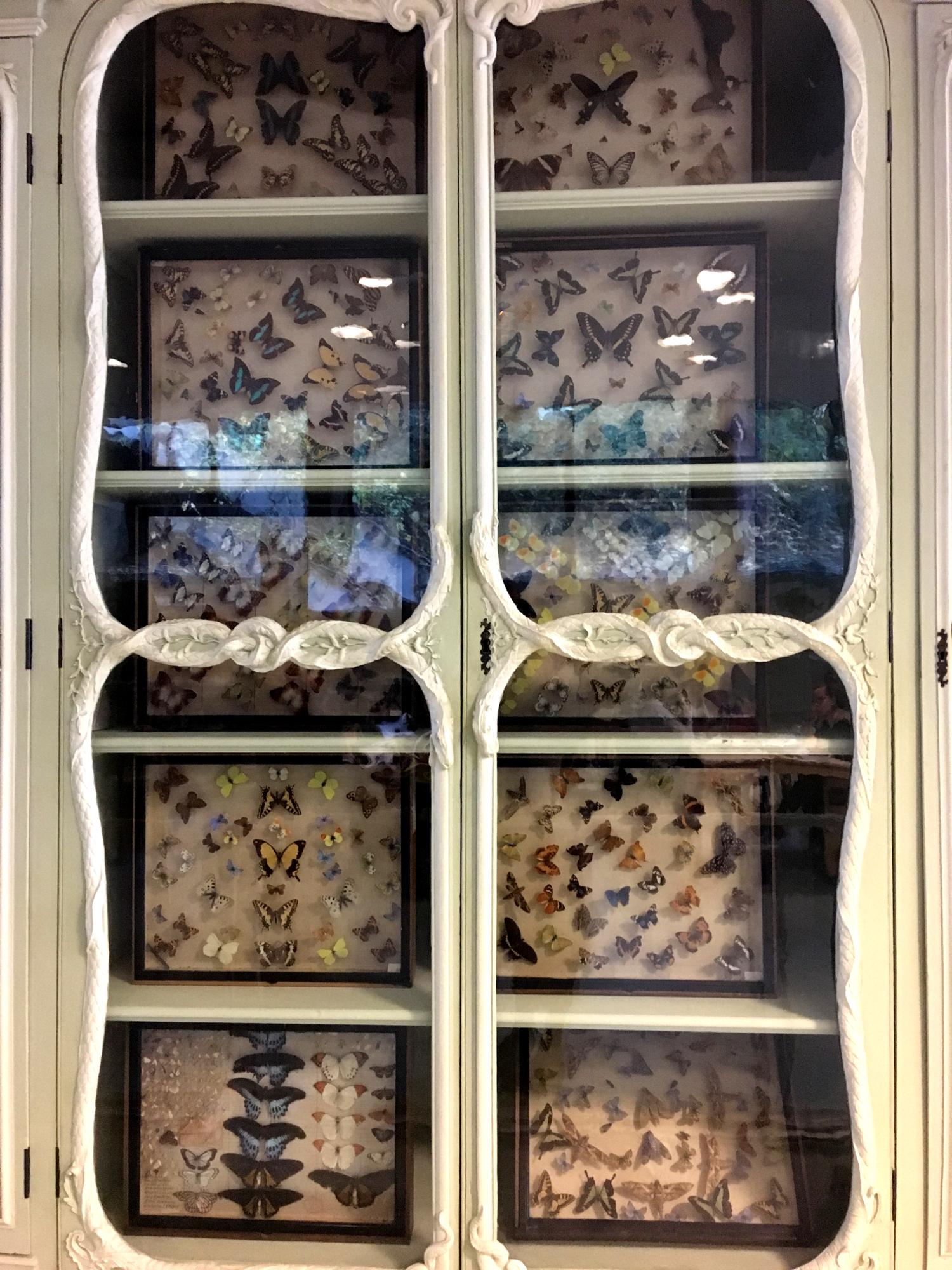 rocaille-blog-cabinet-de-curiosites-joseph-bonnier-de-la-mosson-wunderkammer-5