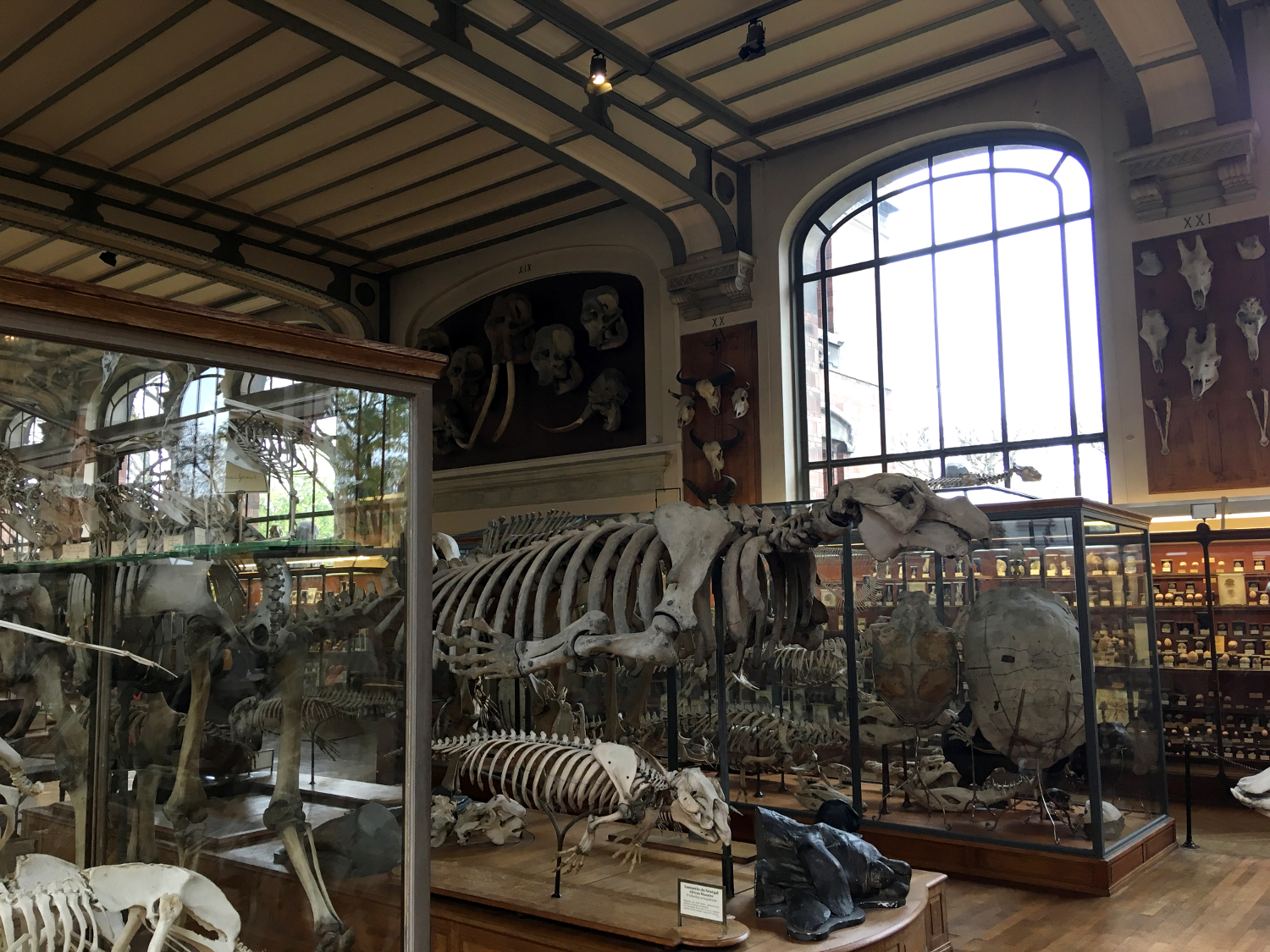 rocaille-blog-paris-museum-national-dhistoire-naturelle-6