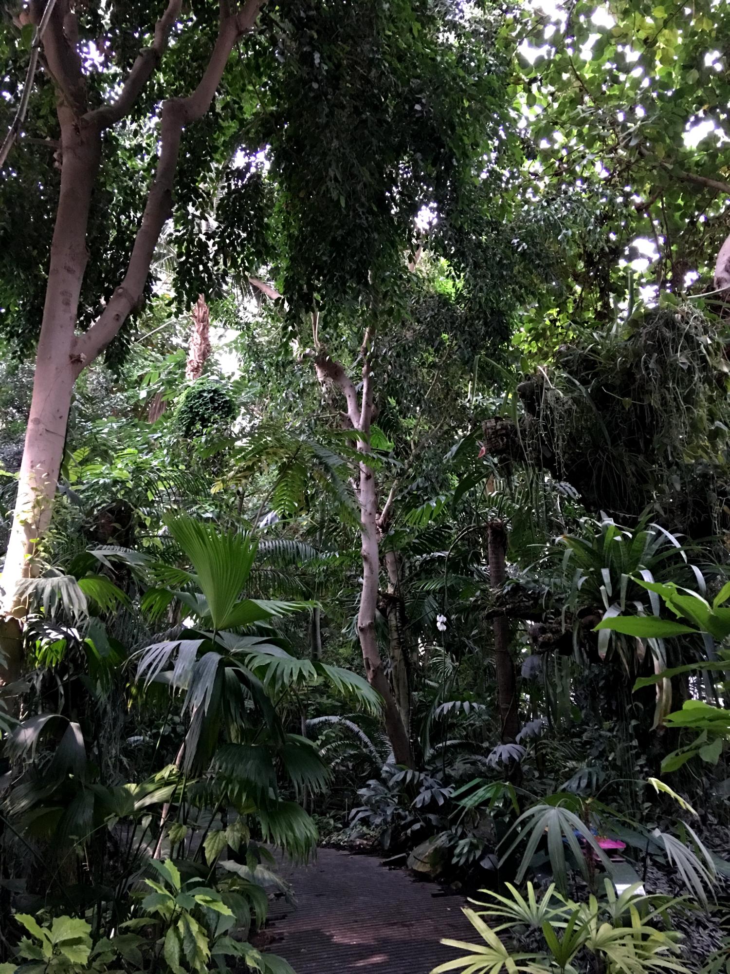 rocaille-blog-paris-jardin-des-plantes-10