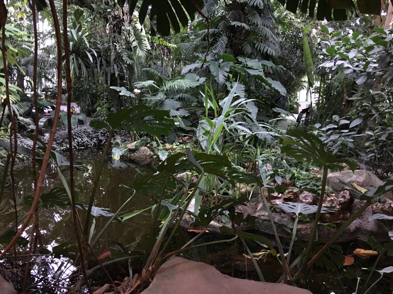 rocaille-blog-paris-jardin-des-plantes-11
