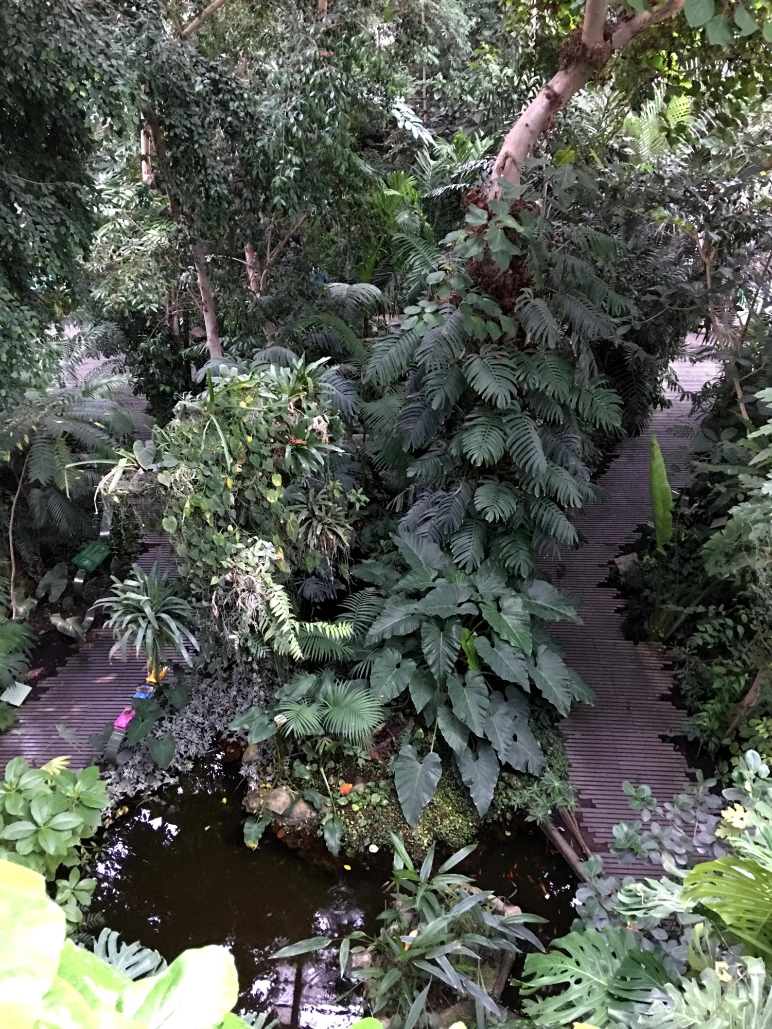 rocaille-blog-paris-jardin-des-plantes-13