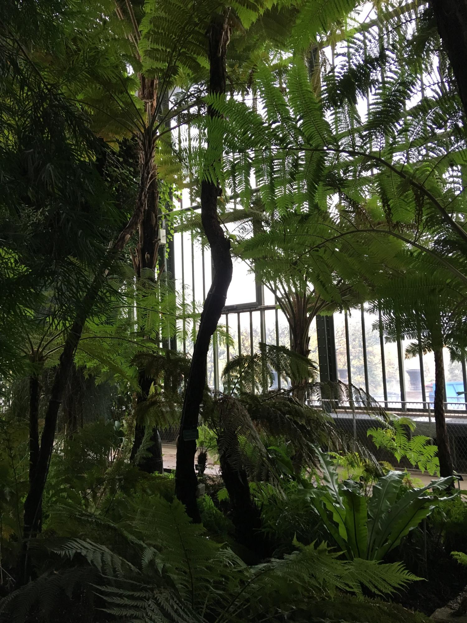 rocaille-blog-paris-jardin-des-plantes-17