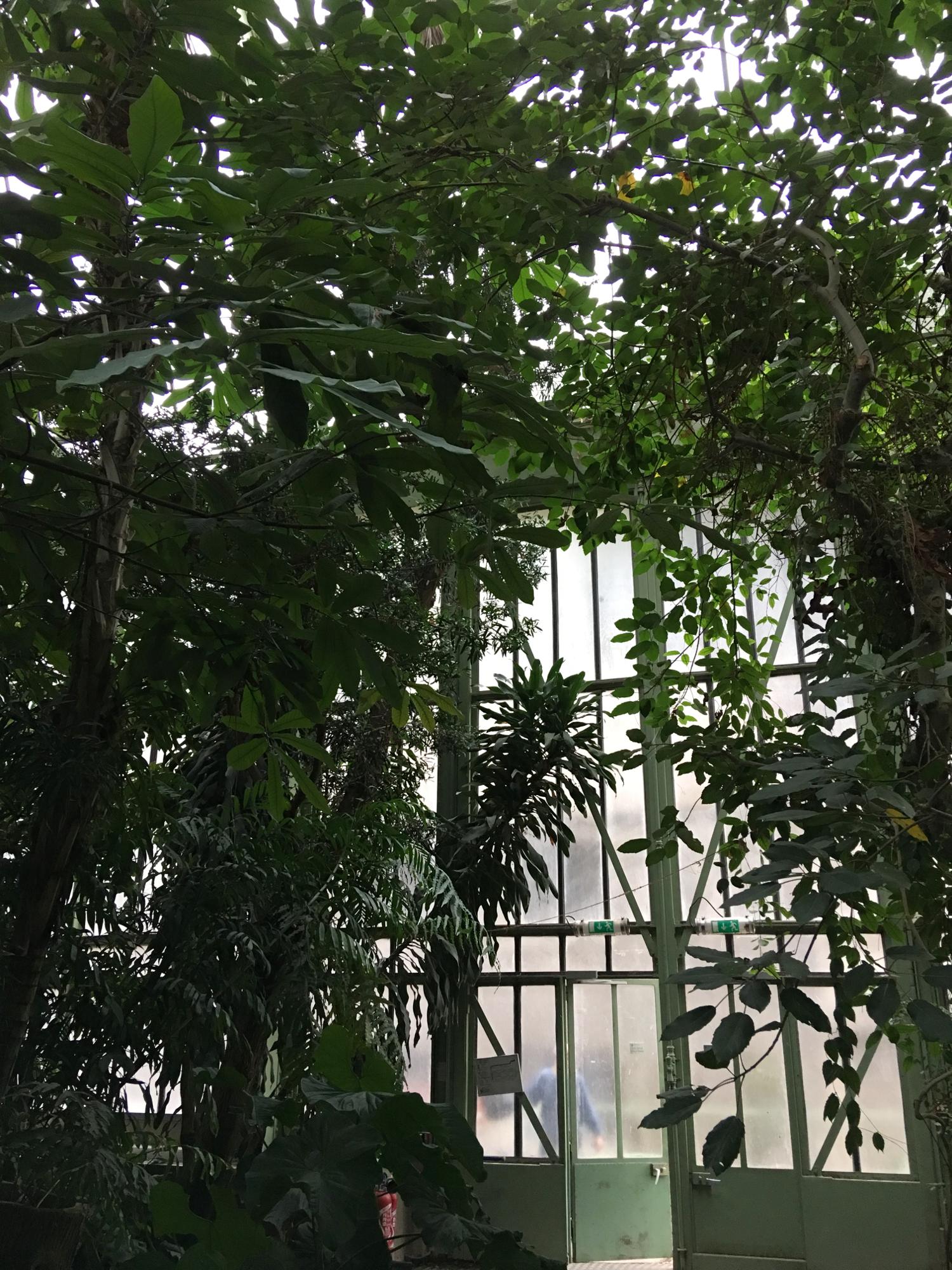 rocaille-blog-paris-jardin-des-plantes-4