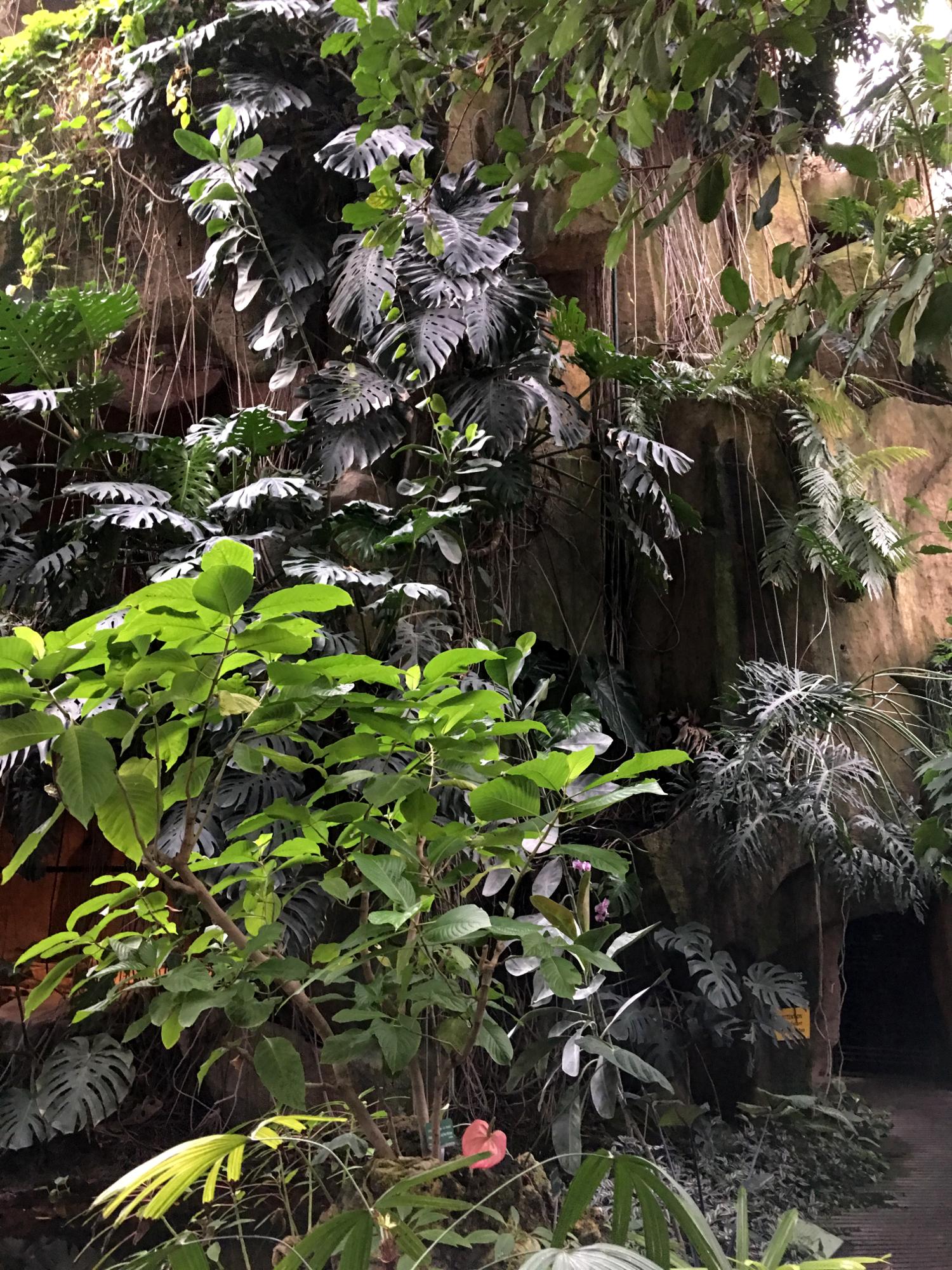 rocaille-blog-paris-jardin-des-plantes-7