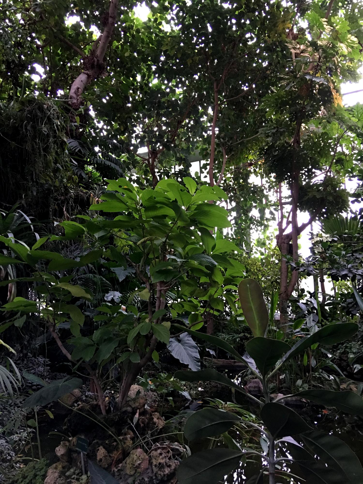 rocaille-blog-paris-jardin-des-plantes-9